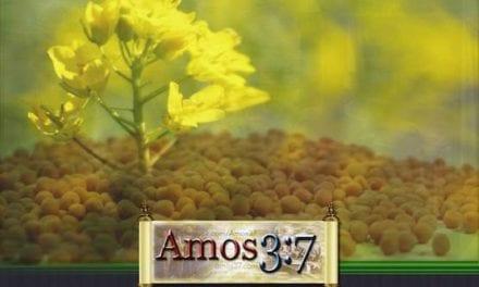 Kingdom Parables Session 05