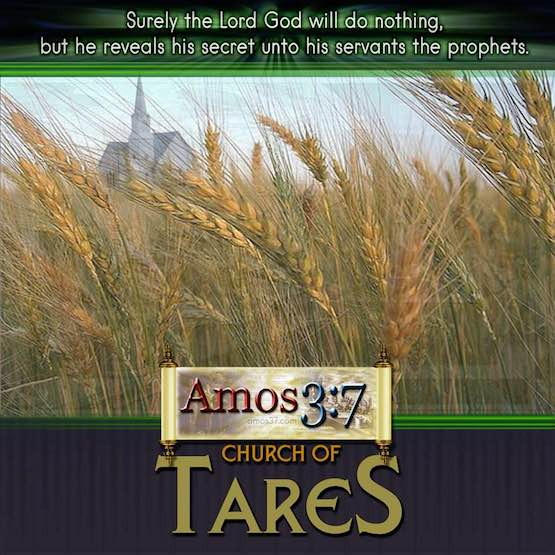church growth,church of tares,rick warren,expose,